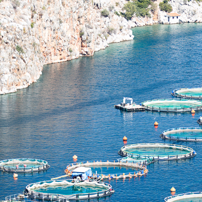 Fish Farms & Fisheries
